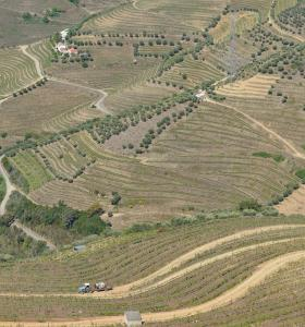 Portugal: BLC3 develops biofuels from co-products of vines and trees
