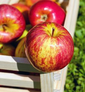 Apple polyphenol supplements shown to alleviate UV-induced skin damage