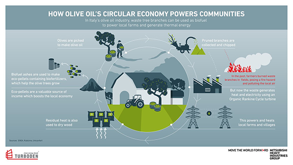 How Olive Oil's Circular Economy Powers Communities